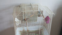 2 zebra finches  with cage and stand