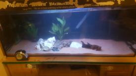 3ft fish tank