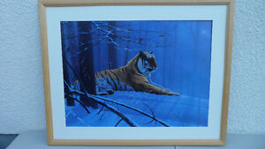 Rod Tribiger Siberian Majesty Large Limited Edition Print $300. Prince George British Columbia image 2