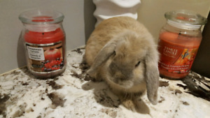 3m old lop eared girl