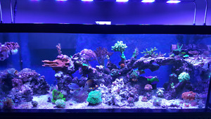 75 gallon  saltwater reef aquarium fish tank