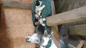 Free Kittens!!