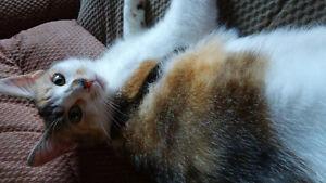 lost female calico cat :'(