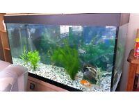 Fluval Roma 200 Aquarium/Fish Tank with stand & extras