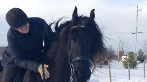 FREE HORSE TRAINING/COACHING