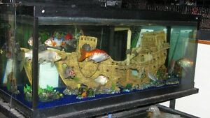 Aquariums  NEW and USED... MUST BE SOLD !!!!