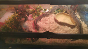 Ball python enlcosure with dish and 2lights 2 fixtures