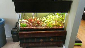 40 gallon tank, stand/coffee table, canopy and equipment