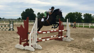 Epic Love - Gelding for lease or sale
