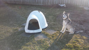 Medium size Igloo dog house