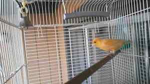 Canary + cage