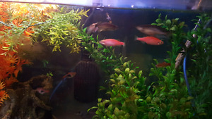 Guppies baby's   for sale