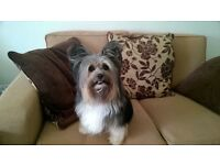 Stephanie's Dog Grooming / Dog Walking ** Mobile and Salon **