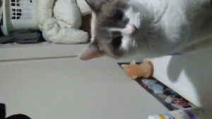 Two year old female cat