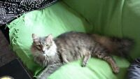 Wonderful free 2yr old cat to a loving home!!