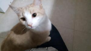 Female kitten 1yr old