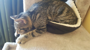 Rehoming 2 kittens 4 1/2 months old;