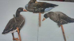REAL GEESE SILHOUETTE DECOYS