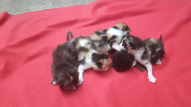 Beautiful kittens for sale near Bathgate Eh48 3At