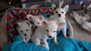 ADORABLE LITTLE PUPPYS