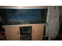 4ft fish and external filter