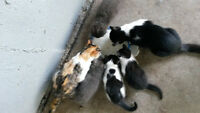 Free,,,Kittens Looking for another Home
