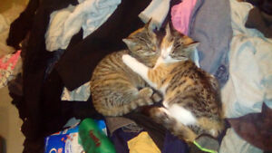 Two female cats (sisters)