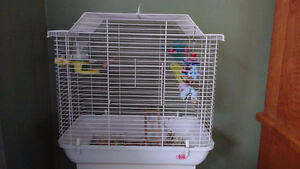 Yellow Budgie  with cage, toys, food - just place in your home