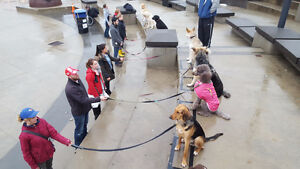 OUTDOOR Dog Training - In the REAL World!