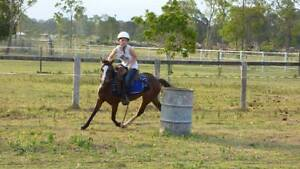 Horse Trainer Burpengary Caboolture Area Preview