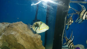 Reefs N Reptiles  all saltwater fish %30 off till the end of wee