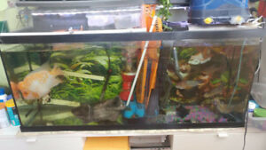 "Fish Tank for sale 48"" x 12"" x 20"""