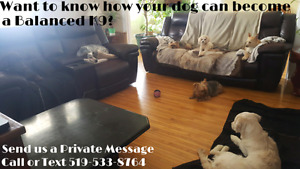 Dog Daycare-Boarding Now Accepting new Dogs - Balanced K9 Living