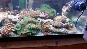 Saltwater Corals and live rock