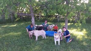 HI DOG SITTER FOR $ 20.00 A DAY Peterborough Peterborough Area image 2