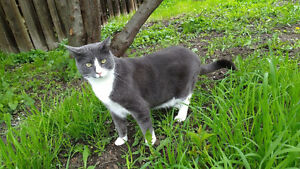 Missing cat from 6597 Herry Rd Pleasant Valley area
