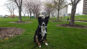 The Sophisticated Dog - Dog Walker, Pet Sitter, Trainer Sarnia Sarnia Area image 8