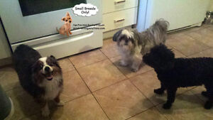 *FULL FOR HOLIDAYS* HAPPY LITTLE DOGS HOME DAYCARE SINCE 2010 West Island Greater Montréal image 2