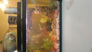 Male & Female Guppies For Sale