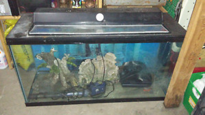 35 Gallon tank with Everything