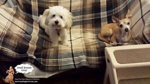 Cage-free playdates/sleepovers for small dogs only West Island Greater Montréal image 3