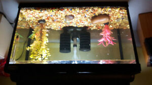 5 gal tank with light canopy and filter 3 cray fish
