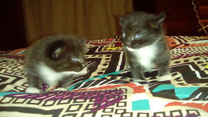 2 kittens free to good homes