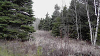 150 ACRES OF PRIVACY IN NOELVILLE ON YEAR-ROUND ROAD