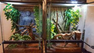 2 Geckos a crêtes  et 2 Terrarium 18x18x24 tout inclus