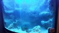 70 gallon corner fish tank / aquarium
