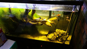 Bird Cages and Aquariums for sale