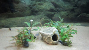 Freshwater aquarium fish tank plants
