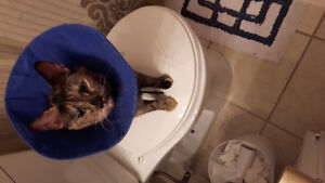 11 month old spayed female needs a loving home