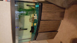 80 front curved fishtank with stand
